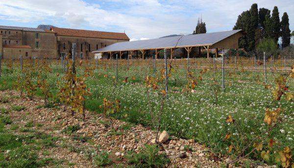 Panneaux solaires dans les vignes